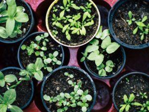 garden plants gardening soil