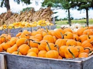 pumpkins in wood wagon